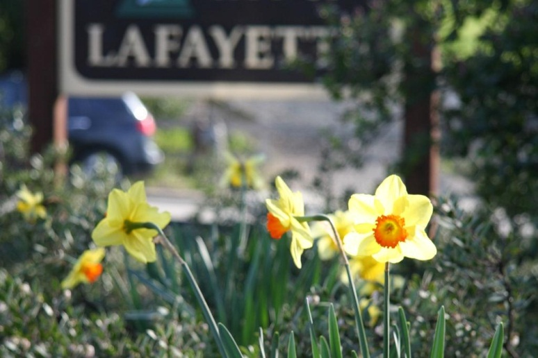 Lafayette Furnished Short Term Rental Housing